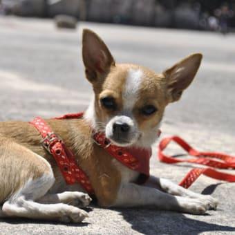 大きさは関係なし…最も攻撃的な犬TOP10