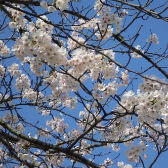 桜もいいけど・・・
