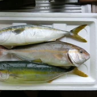 千葉の萩生漁港の漁師さんからお魚いただきました。