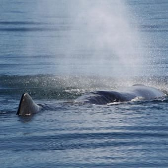 クジラの海