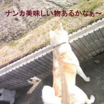 リンちゃんのお散歩(^_^)/♪Ⅱ
