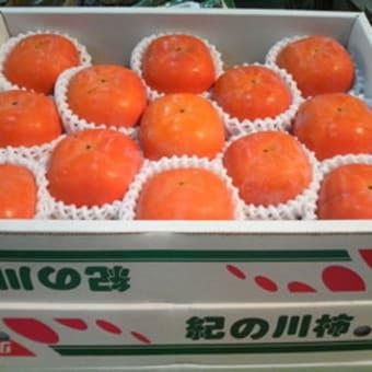 旬の果物 第一弾 『和歌山 紀ノ川柿』