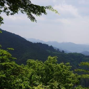 478クリンソウ咲く金剛山