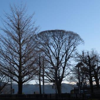 賀茂川ぶらぶら鳥散歩