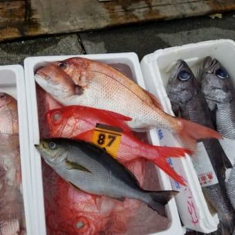 小田原早川漁港で水揚げされた新鮮な魚介類を召し上がることが出来ます