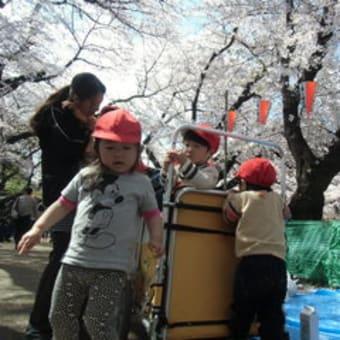 お花見散歩に行きました!     《スターキッズ上野桜木保育園》