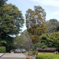鎌倉にも遅い秋がやってきた;鎌倉中央公園の紅葉