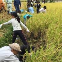 5年生 稲刈り体験