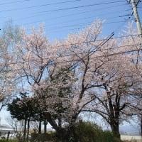 サテライトからこんにちは! ~春の訪れ~