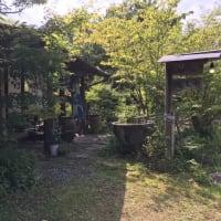 🌳🌳🌳森林浴🌳🌳🌳