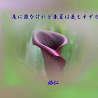 『 花に罪なけれど朱夏は気もそぞろ 』フォト良寛さん575yts0504