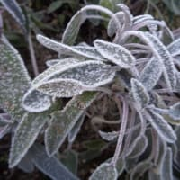今朝は冷えました!