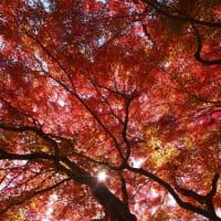 紅葉いろいろ。