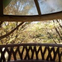 相模原公園今オススメ紅葉の落羽松