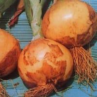 植物の活力を活性する、リズム3(特殊肥料)