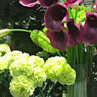 初夏の花 カラー(Calla Lily)