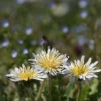 またまた白い花です