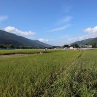 毎年の稲刈り