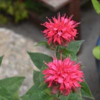 庭の花 (No 2046)