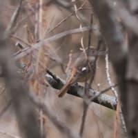 2014年3月19日の鳥撮り。