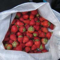 収穫時期末期のイチゴの活用