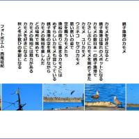 銚子漁港のカモメ
