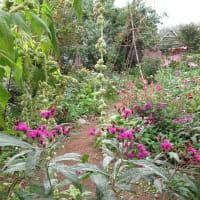 秋の花咲くガーデンソイル
