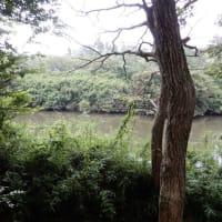 7/31南山公園ウオーキング