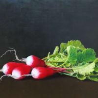 『ラディッシュ』油彩画作品を岡山の親友の画廊に送りました