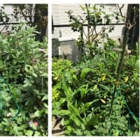 先週に続き庭の剪定