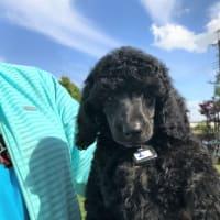 Rioの子犬