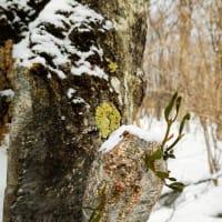 泉ケ岳 冬山自然観察