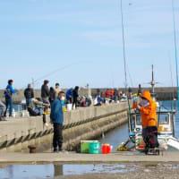 安乗港は釣り大会?