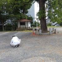 御神木の銀杏拾い☆彡