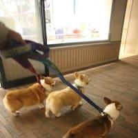 歩け!体育の日・・・