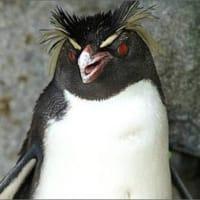ペンギン恐怖症