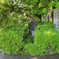 〔なにわ御朱印巡り〕玉造稲荷神社 足の短い鳥居は阪神淡路大震災の影響