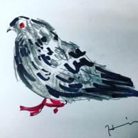 フランスの鳩