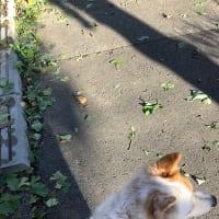 台風一過をヘレンとお散歩