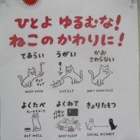 地域猫活動のパネル&写真展とねこの会譲渡会