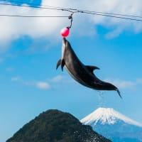 【伊豆・三津シーパラダイス】イルカの海 ショーステージ 後編