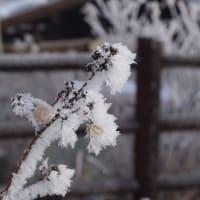 寒さのシンボル Rime