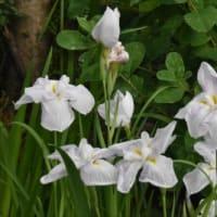庭の花 (No 2043)