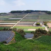 雲仙半島の棚田巡り(長崎県・雲仙市の「溜水の段々畑」)