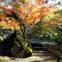 たつの市・東山公園の紅葉が見ごろに 2019.11.16