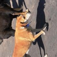 捨て犬猫が急増・経済危機・市の予算半減、それでも市は「一頭も殺処分しない」との方針を守り続けている。