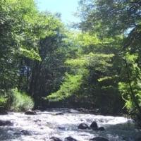 まだまだ真夏の渓流。(346)