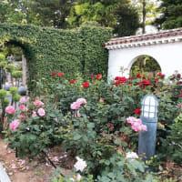 香りの花園でピクニック