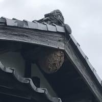 蜂の巣 驚愕・・・