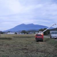 飼料用米の稲刈り中です。